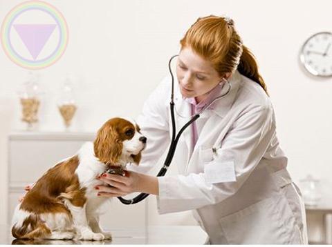 ngành thú y