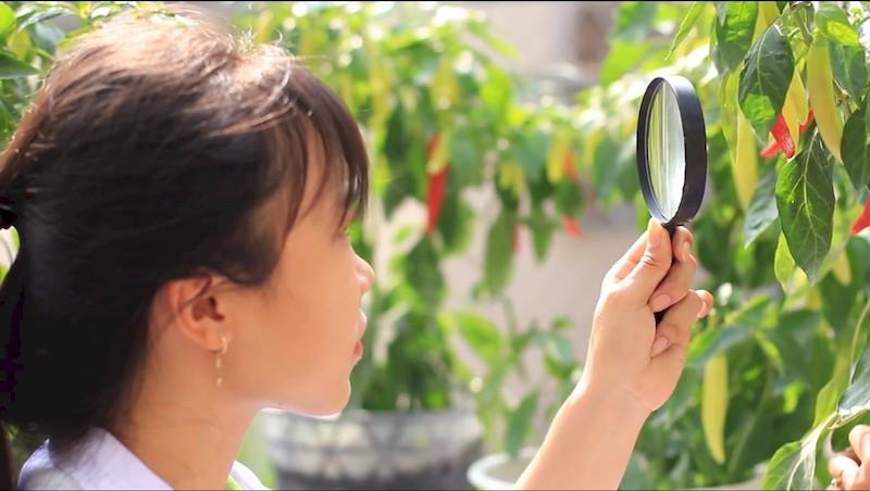 ngành bảo vệ thực vật