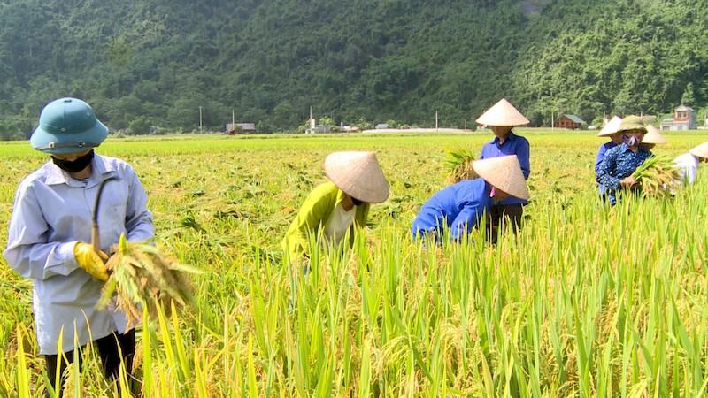 ngành phát triển nông nghiệp