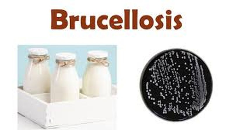 Bệnh Brucellosis