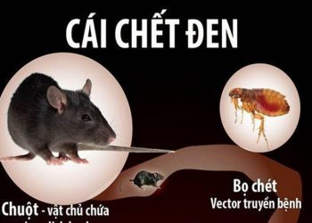 Bệnh dịch hạch – cái chết tràn lan cho quần thể