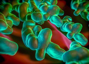 Nhiễm Campylobacter – viêm tĩnh mạch đang chực chờ