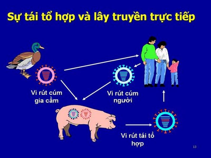 Cúm A H1N1