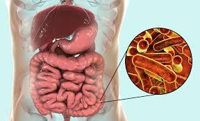 bệnh lỵ trực khuẩn