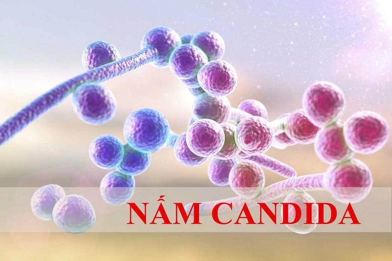 Bệnh nấm Candida