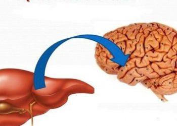 Bệnh não gan – Hệ quả của việc suy gan nặng