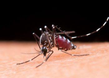 Bệnh sốt rét là gì? Mức độ nguy hiểm của bệnh