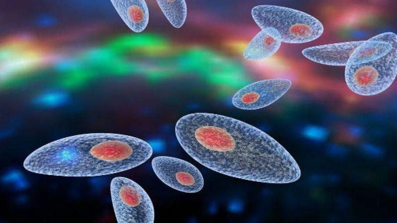 Bệnh Toxoplasmosis