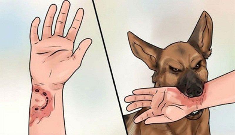 bệnh truyền nhiễm lây truyền qua động vật