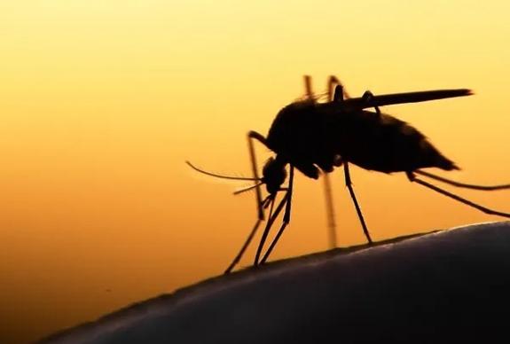Các hạng mục kiểm tra bệnh truyền qua côn trùng là gì?