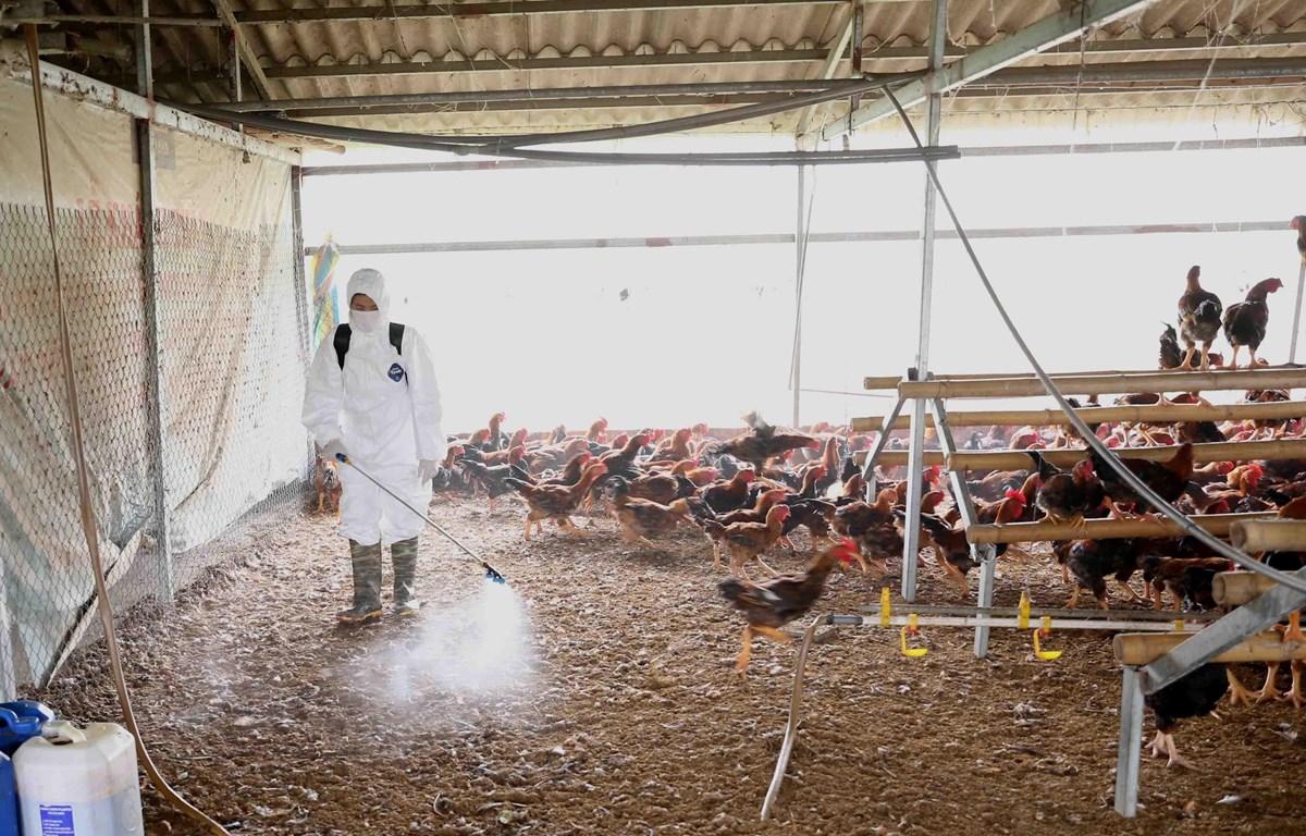 Các hạng mục kiểm tra đối với nhiễm vi rút cúm gia cầm độc lực cao là gì?