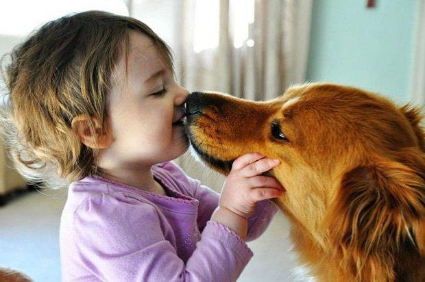 Các phương pháp điều trị bệnh truyền nhiễm do động vật gây ra?