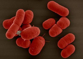 Nhiễm Acinetobacter ảnh hưởng thế nào? Một số triệu chứng của bệnh