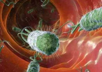 Nhiễm Escherichia coli độc hại ruột và các triệu chứng, phương pháp điều trị