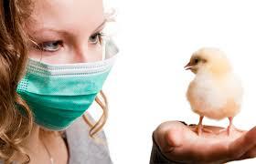 nhiễm vi rút cúm gia cầm độc lực cao