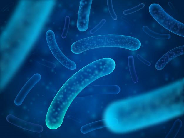 Những bệnh nào có thể gây ra do nhiễm Escherichia coli xâm nhập đường ruột?
