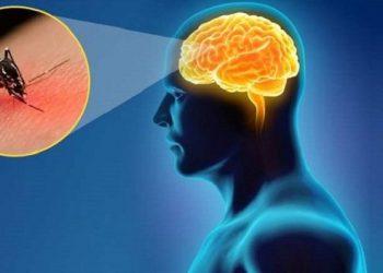 Tổng quan chung về bệnh viêm não Nhật Bản