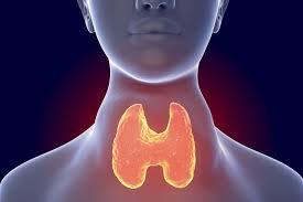 Bệnh u sợi tuyến giáp có thể gây ra những bệnh gì?