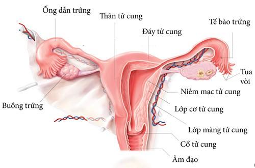 Các hạng mục khám cho u mô đệm nội mạc tử cung âm đạo là gì?