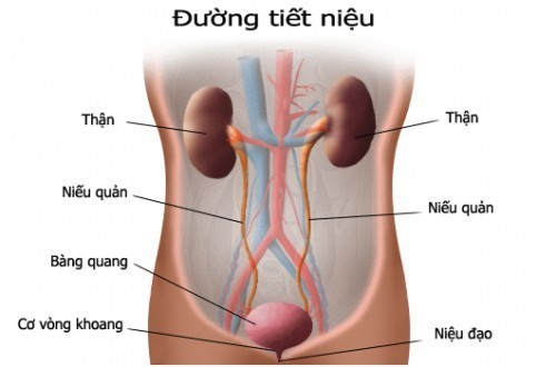 Các triệu chứng của bệnh ung thư niệu đạo nam giới là gì?