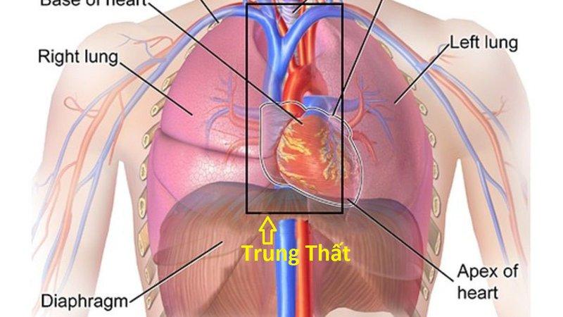Các triệu chứng của u nang và khối u trung thất là gì?