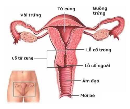 Khám bệnh u xơ cổ tử cung gồm những hạng mục nào?