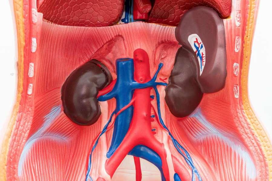 khối u lành tính của lá lách