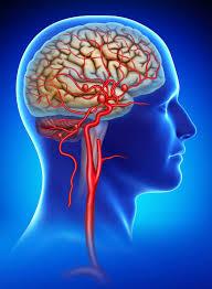 Các hạng mục kiểm tra đối với tổn thương quỹ đạo của u màng não hình cầu là gì?