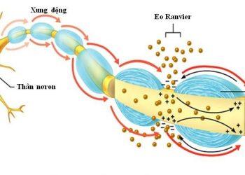 Myxoma vỏ bọc thần kinh là gì? Nguyên nhân, chẩn đoán, chế độ ăn