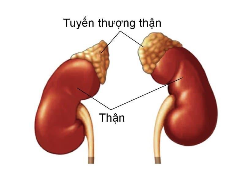 Phương pháp điều trị tổn thương thận do khối u rắn là gì?