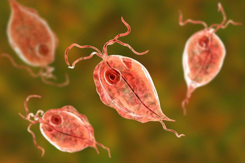 Viêm âm đạo do Trichomonas