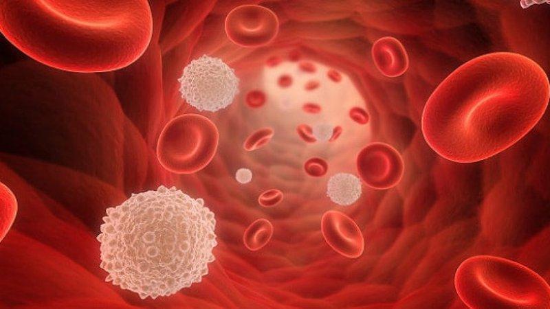 Các hạng mục khám cho bệnh bạch cầu nguyên bào nuôi ở vị thành niên là gì?