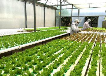 Ngành Khoa học cây trồng là gì? Top 5 trường uy tín chất lượng nhất