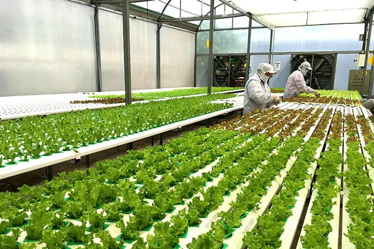Ngành Khoa học cây trồng là gì?