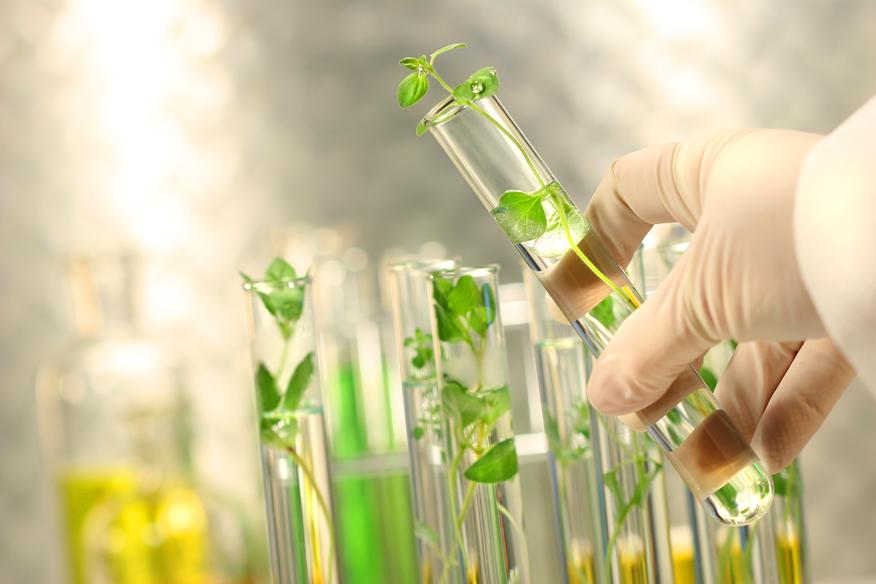Ngành Bảo vệ thực vật là gì?