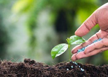 Ngành Bảo vệ thực vật là gì?Top 5 trường uy tín chất lượng