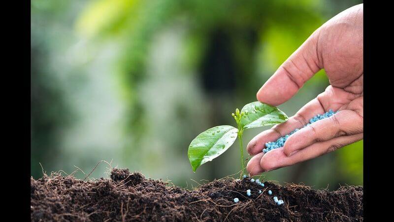 Điểm chuẩn đối với ngành Bảo vệ thực vật