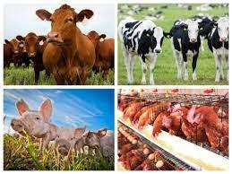 Mức Điểm chuẩn đối với ngành Chăn nuôi