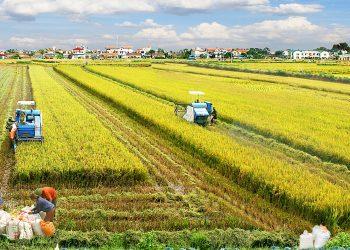 Ngành Phát triển nông thôn là gì – Top 4 trường uy tín chất lượng