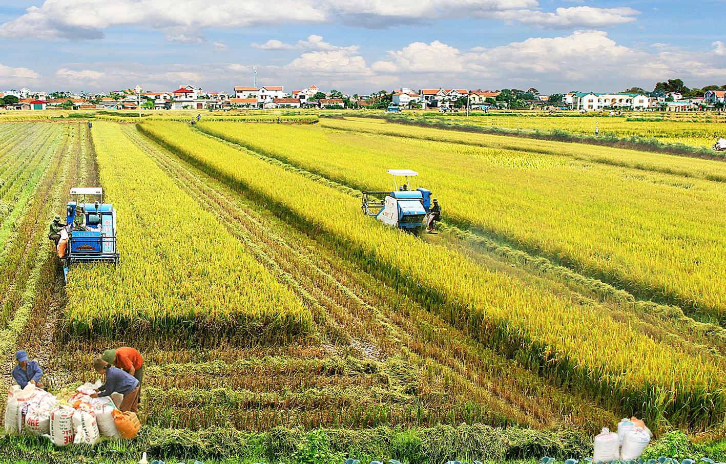 Ngành Phát triển nông thôn là gì?