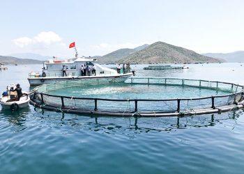 Ngành Nuôi trồng thủy sản là gì? Top 5 trường uy tín chất lượng