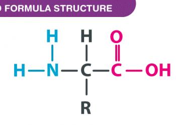 Công thức axit amin là gì ? Cùng tìm hiểu về nó.