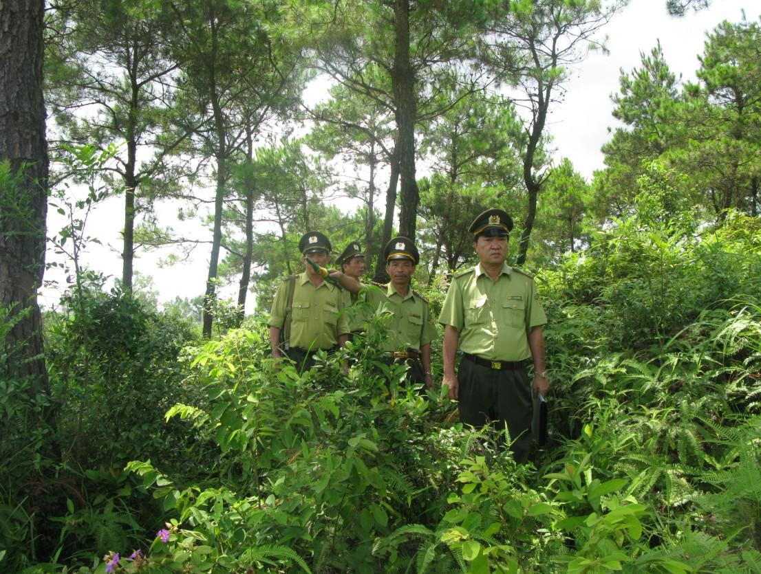 Việc làm của ngành Quản lý khoáng sản rừng sau khi ra trường