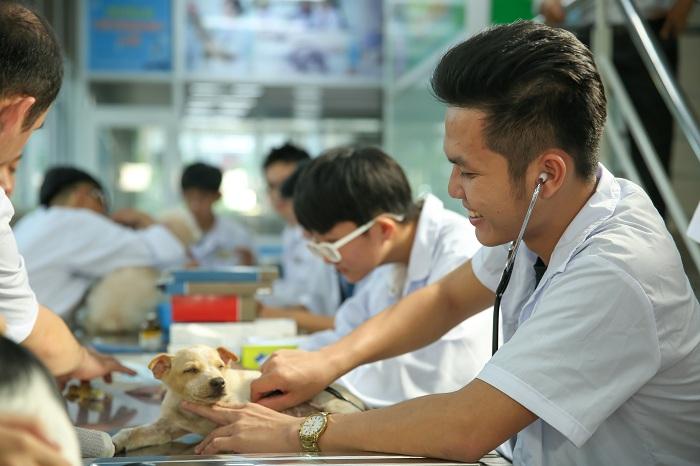 Khám phá về ngành Thú y