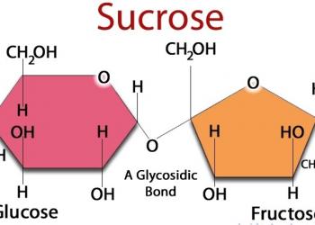 Sucrose  (C12H22O11) – Hóa học đời sống
