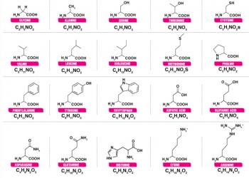 Axit amin là gì? Đặc tính và Cấu trúc của axit amin