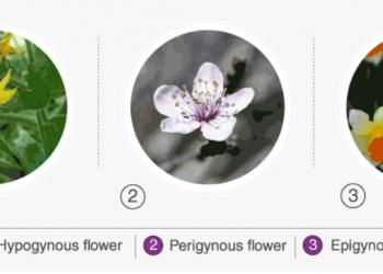 Các loại hoa