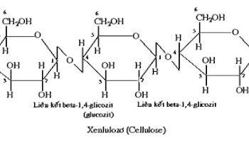 Cellulose – (C6H10O5)n – Hóa học đời sống