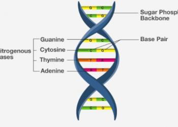 Dạng đầy đủ của DNA là gì?