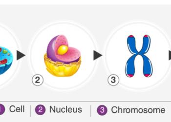 DNA: Cấu trúc, Chức năng và Khám phá